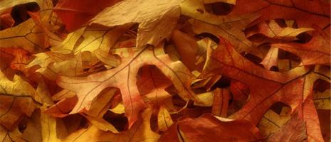 Insert images from your photo albums into your content!